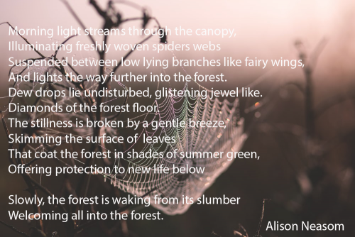 Into the Forest Alison Neasom