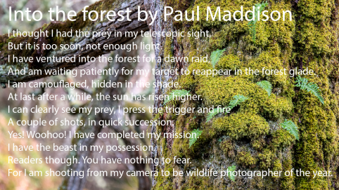 Into the Forest Paul Maddison